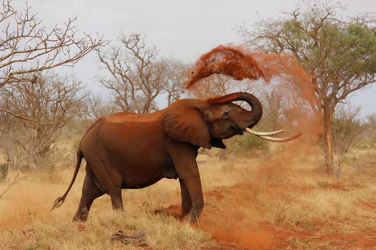 Väldens 10 största levande djur